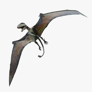dimorphodon 3D model