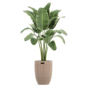 decorative banana palm tree 3D model