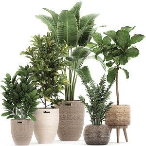 3D ornamental plants rattan basket model
