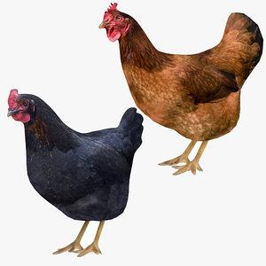 brown black chicken 3D