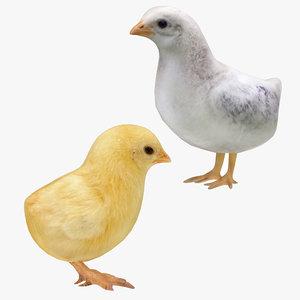 3D chicken chick 2 1 model