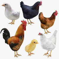 Rooster Chicken and Chick Collection 6 in 1