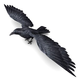 3D raven rigged