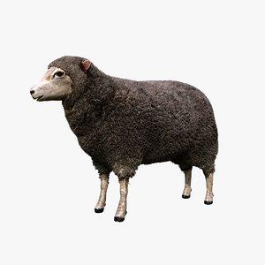 merino sheep animation model
