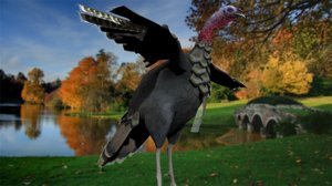 griffon vulture 3D