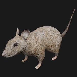 3D mouse rigged