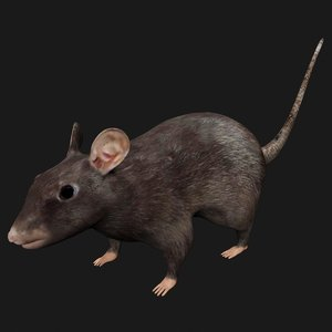 black mouse rigged model