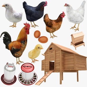 chicken farm objets 11 3D