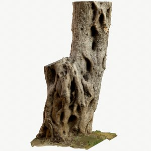 3D scan olive tree photogrammetry