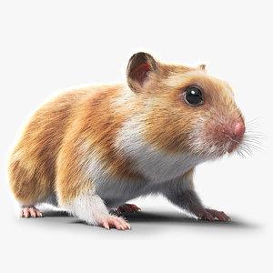 3D hamster hair fur