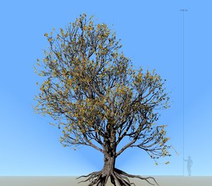 3D american elm tree 001