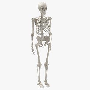 3D human woman skeleton bones model