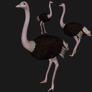 ostrich rigged 3D model