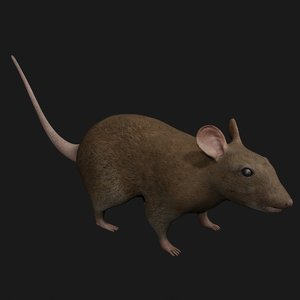 3D brown mouse rigged