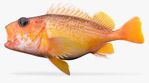 greenspotted rockfish 3D