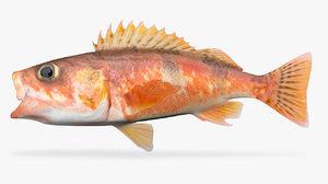 3D halfbanded rockfish model