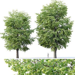 tilia trees 3D model