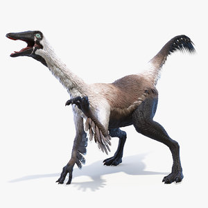 gallinimus gallimimus 3D model