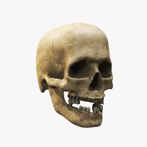 3D human skull v1