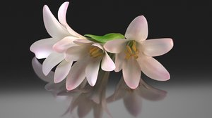 polianthes flower decoration 3D model