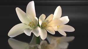 3D polianthes flower