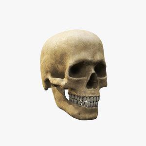 human skull v4 3D model