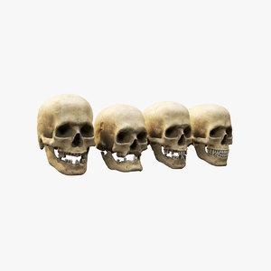 human skull set 3D