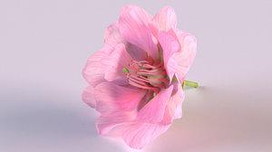 3D model sakura flower plant