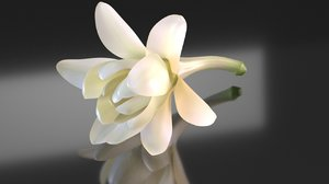 polianthes flower white model