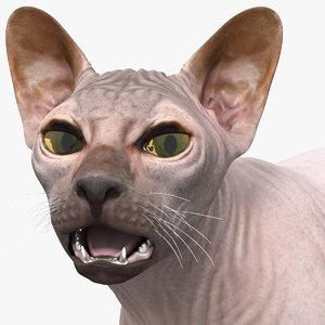 dark cream sphynx cat 3D