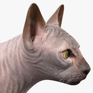 dark cream sphynx cat model