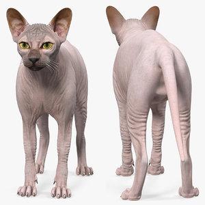 dark cream sphynx cat 3D model
