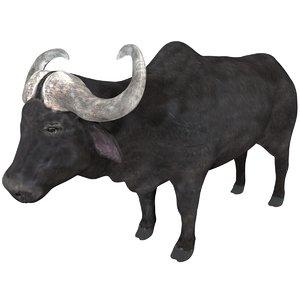 buffalo rigged model
