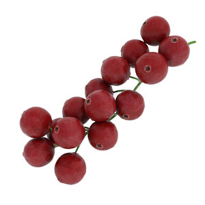 red currant branch 3D