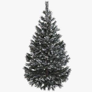 3d pine fir tree snow model