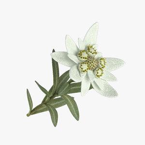edelweiss model