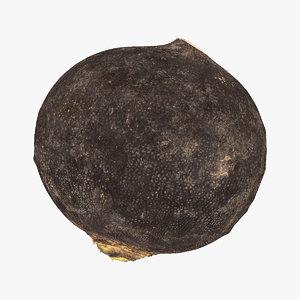 turnip black 04 raw 3D