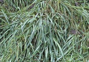 3D real grass hd