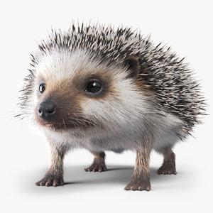 hedgehog fur 3D