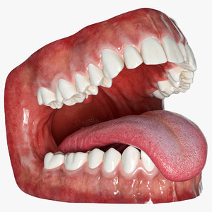 human mouth tongue rigged 3D model