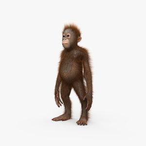 orangutan baby model