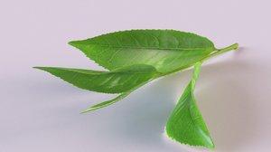 3D model tea sprig spice decor