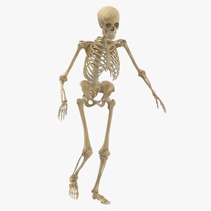 3D real human female skeleton model