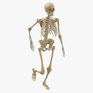 3D real human female skeleton