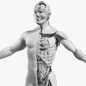 3D mesh male complete anatomy model