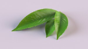 3D tea plants leaf drink