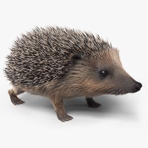 european hedgehog fur 3D