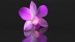 dendrobium flower orchid pink 3D model
