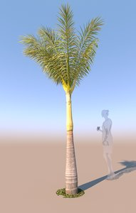 3D young queen palm b model