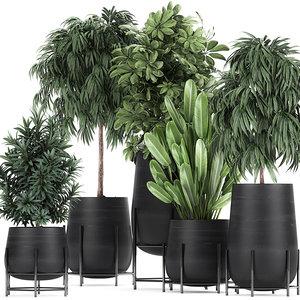 plants flowerpots pots model